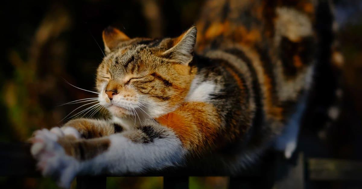 9 Syampu Shampoo Kutu Untuk Kucing Di Malaysia 2020 Productnation