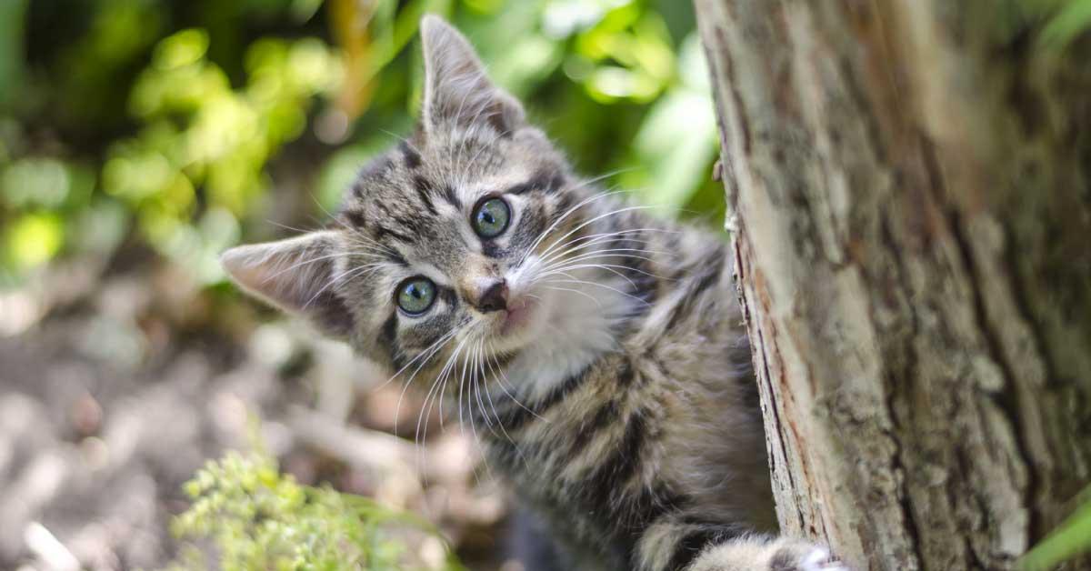 8 Susu Kucing Terbaik Di Malaysia 2020 Dewasa Anak