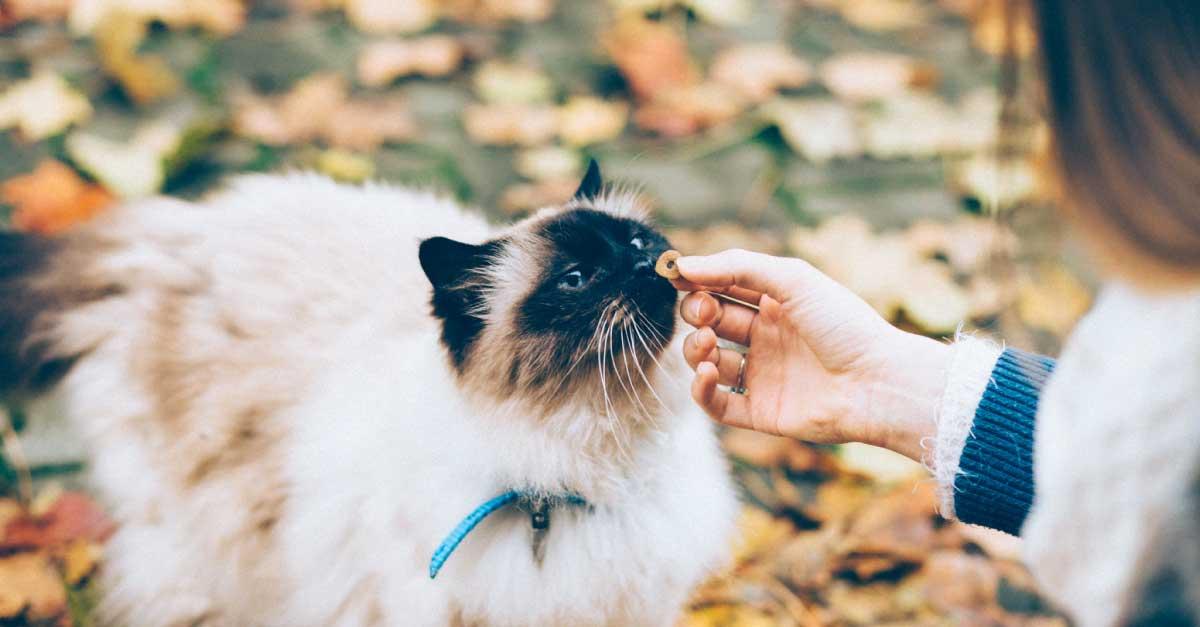9 Makanan Kucing Murah Terbaik Di Malaysia 2020 Productnation