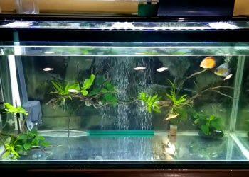 10 Pompa Aquarium Bagus Dengan Spesifikasi Terbaik Di Indonesia 2020