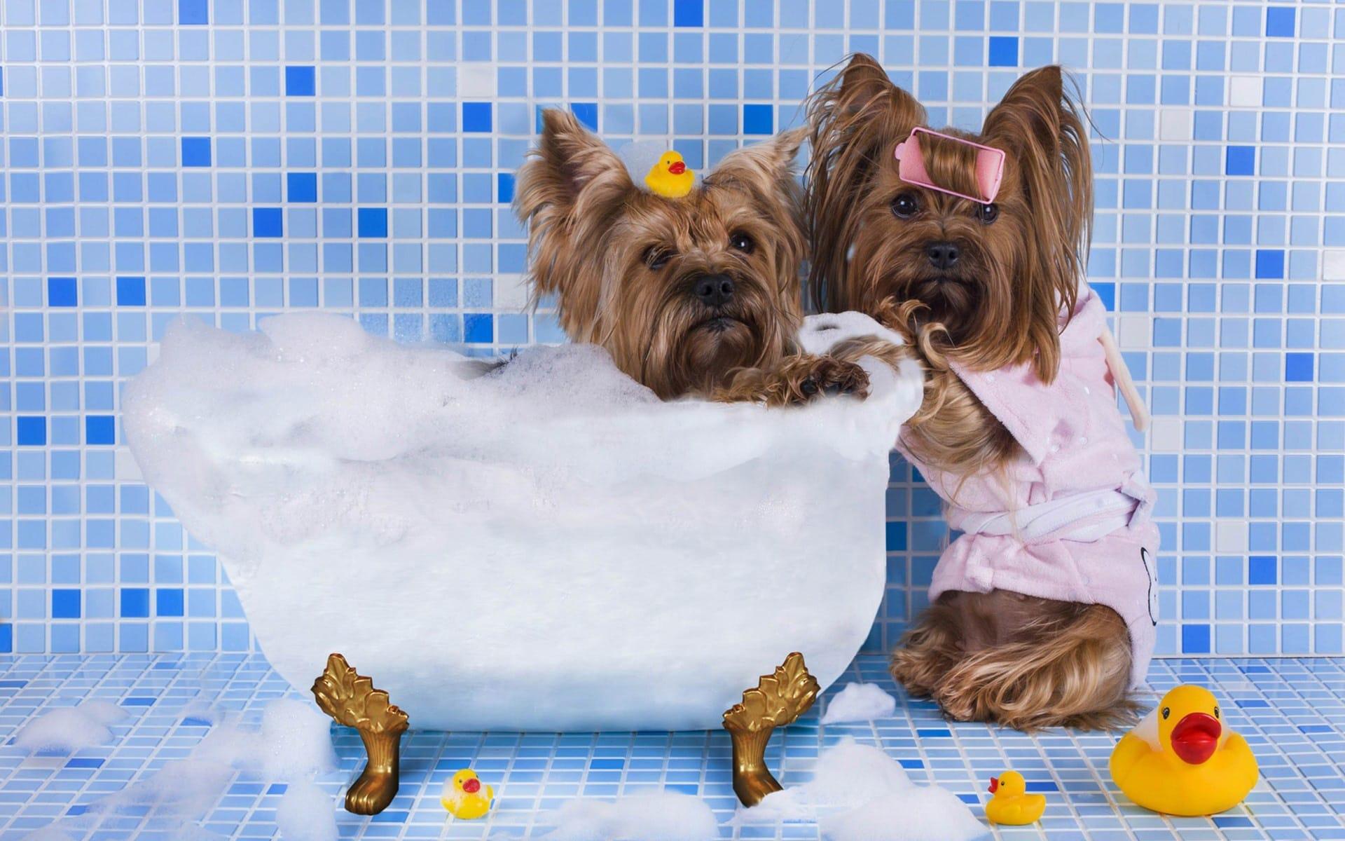 10 Rekomendasi Shampoo Anjing Bagus & Terbaik di Indonesia 2020